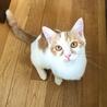 猫・人 大好き スリゴロやんちゃなガクくん