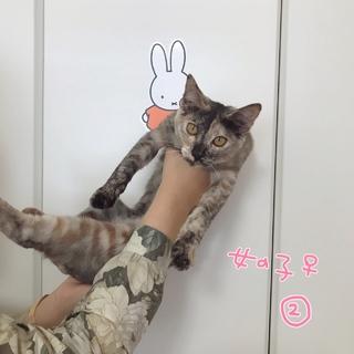 甘えんぼの子猫 女の子