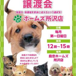 【中止】保護猫・保護犬譲渡会inホームズ所沢店