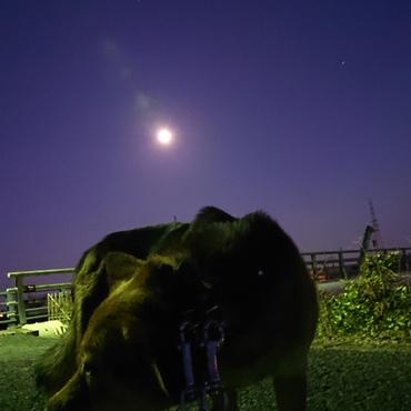 月とアグロ