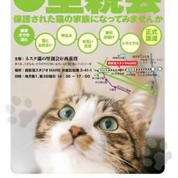 【要予約】ネスタ猫の里親会@西荻窪