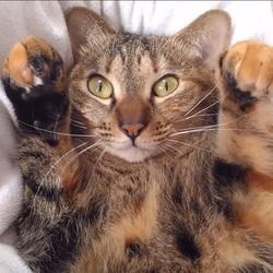TVでお馴染みの猫のチグちゃん主催のお見合い会 サムネイル3
