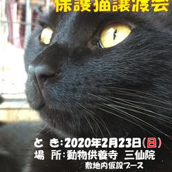三仙院保護猫譲渡会のおしらせ