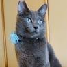 澄んだ瞳が美しいロシアンブルー風猫さん!! サムネイル2