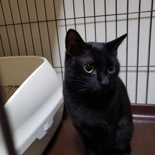黒猫のくーちゃん・六つ子の立派なお母さん猫