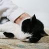 居眠り猫~大人しい性格☆クロ君 サムネイル7