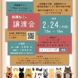 藤井寺保護猫サロン譲渡会