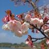 ななと散歩に行ったらきれいな花が咲いてたよ。なっつ、見えてる?