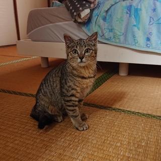 島からの保護猫★ランちゃん