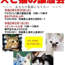犬と猫の譲渡会 サムネイル1
