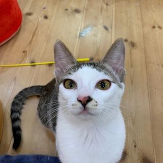 沖縄宮古島からやってきたセンター分けの美人猫