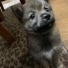 可愛い雑種の子犬