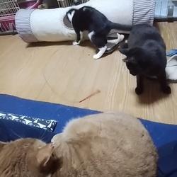 「チャーハン、メンマ最終日」サムネイル3