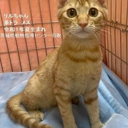 こねこ・成猫の里親会 in 川崎