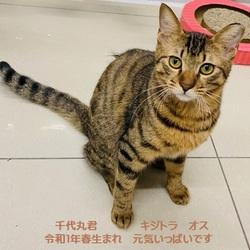 こねこ・成猫の里親会 in 戸越銀座商店街