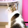 ぬいぐるみみたいな可愛いオトナ猫「のの」 サムネイル3