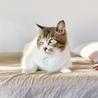 ぬいぐるみみたいな可愛いオトナ猫「のの」 サムネイル4