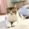ぬいぐるみみたいな可愛いオトナ猫「のの」 サムネイル5