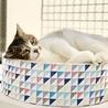 ぬいぐるみみたいな可愛いオトナ猫「のの」 サムネイル7