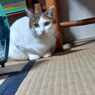 美人三毛猫さん❣️とても賢くほとんど鳴きません