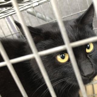 毛艶の良い黒猫です