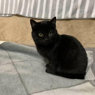 可愛い黒猫 里親決定!!