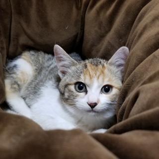 人馴れ修行中のミケ猫ちゃん
