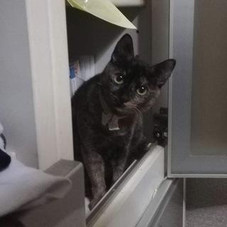 大きな目!美人なサビ猫のティティ