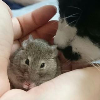 ネズちゃん、よろしくお願いいたします。