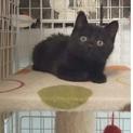 生後2ヶ月のふわふわチビ黒猫君❤️
