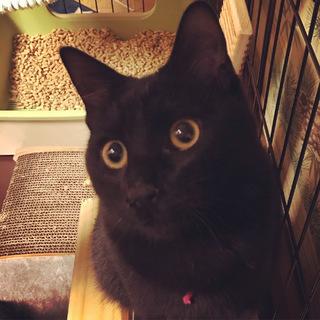 イケメンな黒猫ジニー君☆エンジェルマークあります