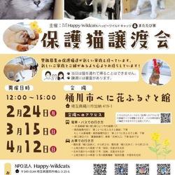 ※※※中止です※※※保護猫譲渡会☆樋川市べに花ふるさと館