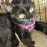 黒猫4か月半マイペースな女の子