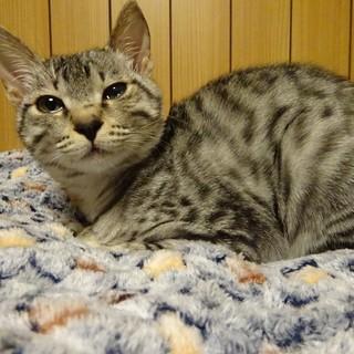 猫ちゃん大好き「ビームス」ちゃん♡