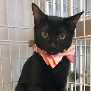 10ヶ月位 美人な黒猫 葉月ちゃん
