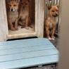 センター収容の子犬達