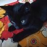 黒猫アマル - ありがとうございました。