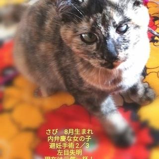 サビ猫のマイト