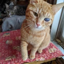 【開催中止】相模大野駅前北口デッキ♪猫の譲渡会♪ サムネイル2
