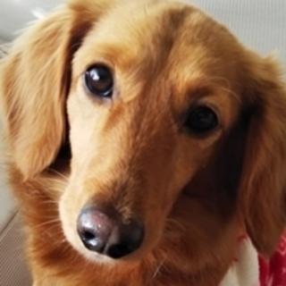 保護犬ナンバーD1374 M・ダックス