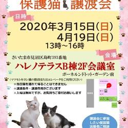 【開催中止】3/15(日)ハレノテラス保護猫譲渡会
