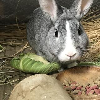 ウサギの男の子