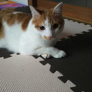 少しぽっちゃり猫さん。
