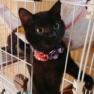 可愛い黒猫くん