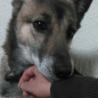 ♥元野犬の♥おとちゃん♥