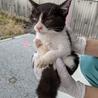 子猫(①女の子)