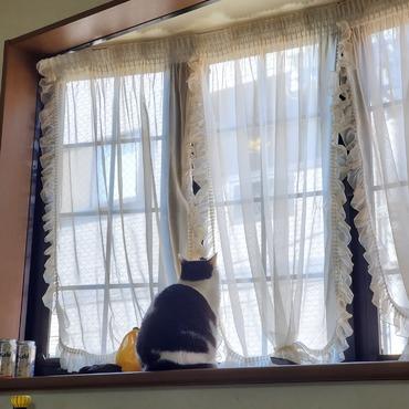 窓の外が気になるの。