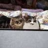 猫同士の相性