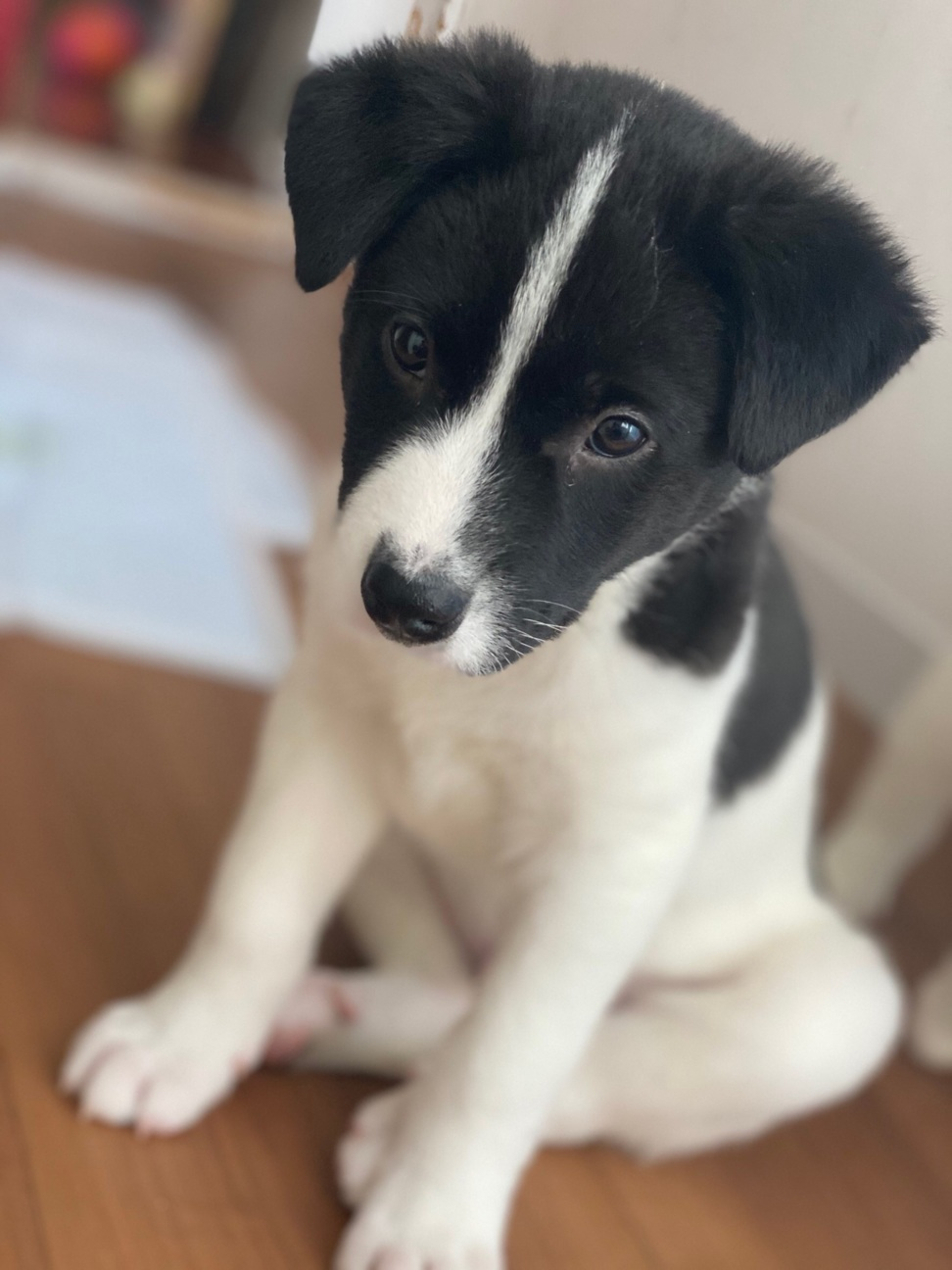ます 沖縄 譲り 子犬 無料