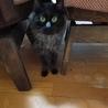 もふもふ鍵尻尾の黒猫くん 写真更新しました。 サムネイル2